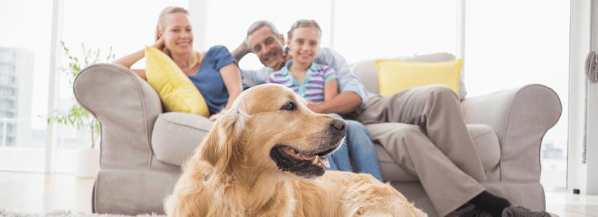 pourquoi faire garder son chien en famille. Black Bedroom Furniture Sets. Home Design Ideas