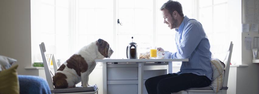 comment faire garder son chien domicile. Black Bedroom Furniture Sets. Home Design Ideas