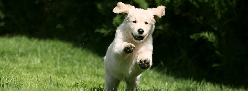 chien en promenade dehors