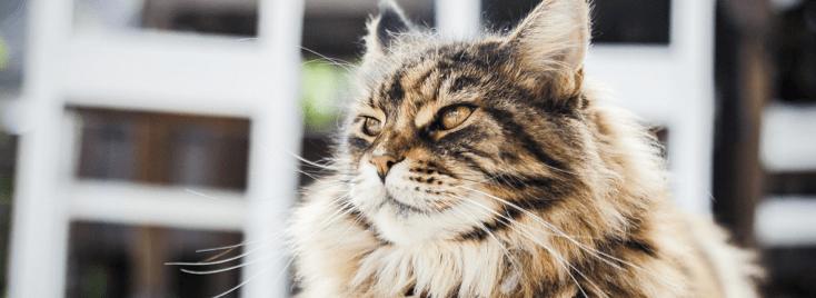 chat-devant-immeuble